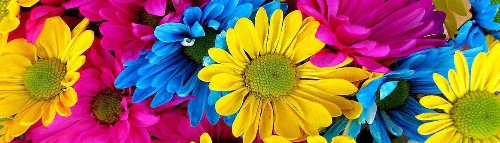 Colecciones - Cuadros de flores
