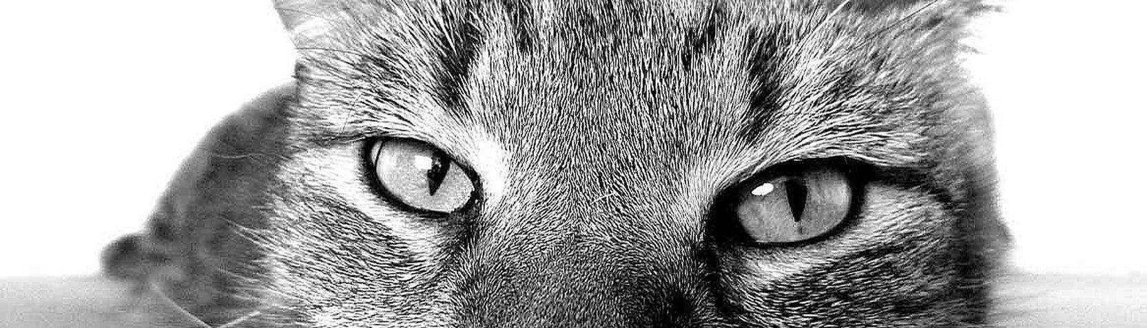 Fotografía - Animales